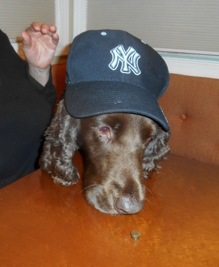 This is our dog Fredi in her Halloween costume.  She considers herself quite a ballplayer.